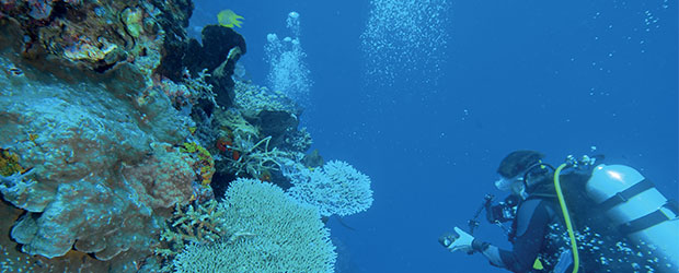 N246_Komodo-plongee-au-bord-du-monde_2
