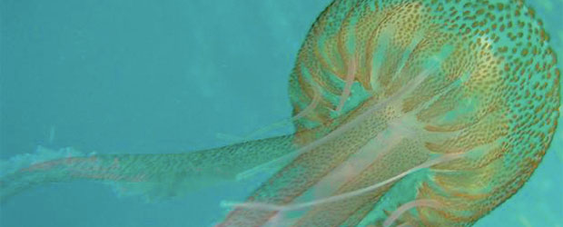 N246_Quelle-meduse-demain_4