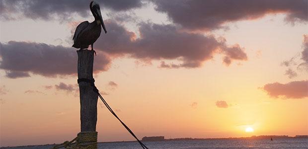 N249_Les-voiliers-du-Yucatan_7