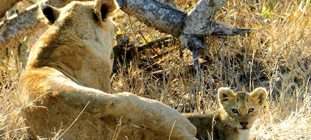 N251_Rencontre-des-geants-Mozambique_2