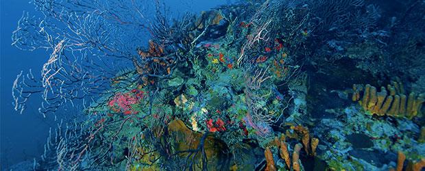N246_Exploration-des-oceans-1