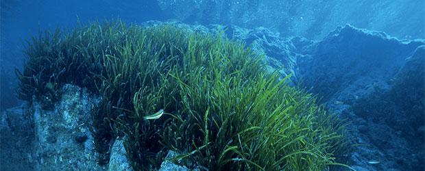 N246_Exploration-des-oceans-2