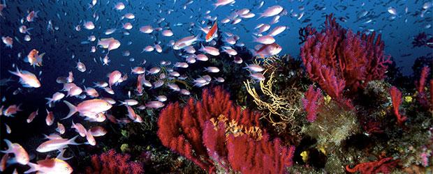 N246_Exploration-des-oceans-3