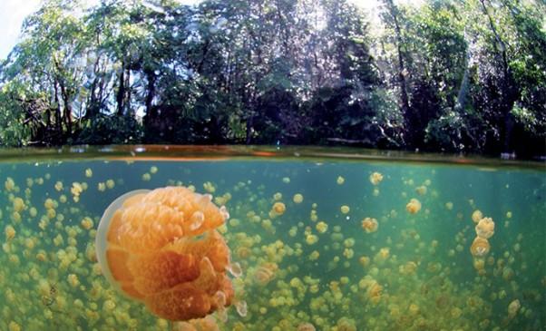 N248_Palau-lac-aux-meduses