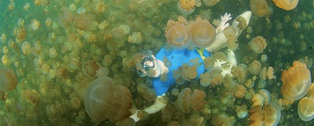 N248_Palau-lac-aux-meduses_4