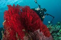 …où tous les biotopes tropicaux existent. © FFESSM CAV-NC
