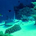 récifs de TUBBATAHALe bleu autrement