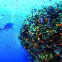 SOUDAN:  l'autre côté  de la mer rouge