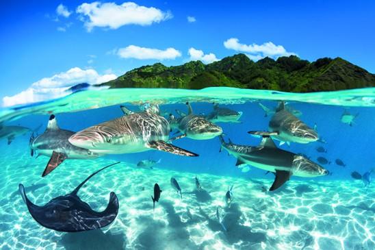 Sharks& ray