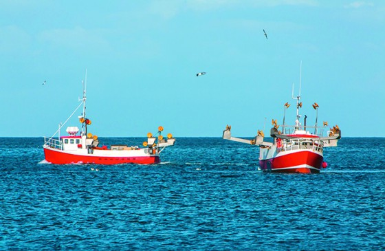 23917006 - commercial fishing boats on mackerel fishing in icelandic waters