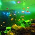 TODI, des poissons dans l'eau