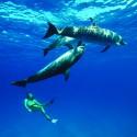 Plongezen famille aux Bahamas