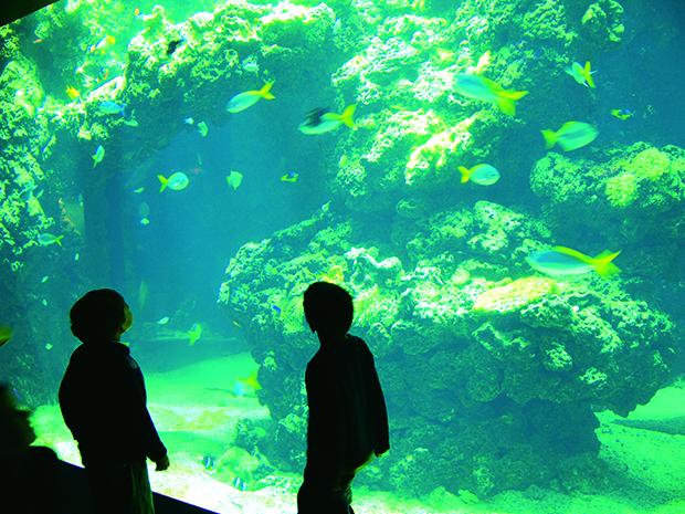 Ocean Museum, Monaco