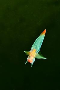 Un papillon de mer