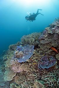 Les coraux de Coral Canyon.