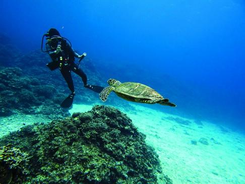 Plongee aux Iles kerama - Okinawa