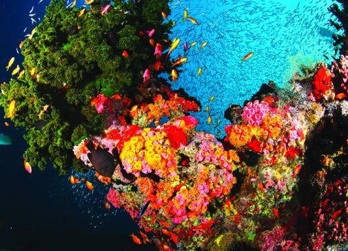 Plongées aux Maldives