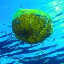 J'observe la vie marine et je m'interroge «Voir, comprendre, aimer, respecter»