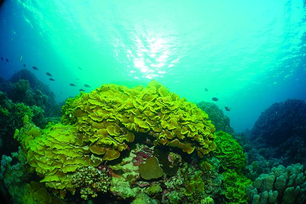 Corail DSC02794