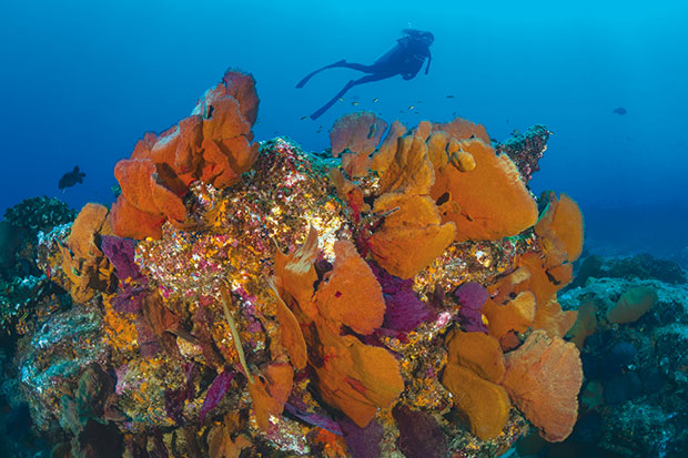 Cabo_Pulmo-recif-FD