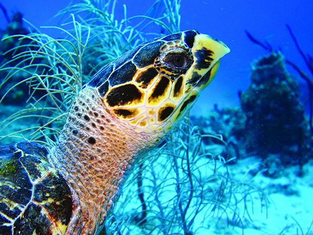 plongée avec tortue