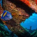 Épaves de la mer Rouge : vestiges et vertiges