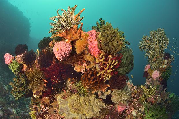 Une formation corallienne avec une communauté d'invertébrés - A coral formation with invertebrates